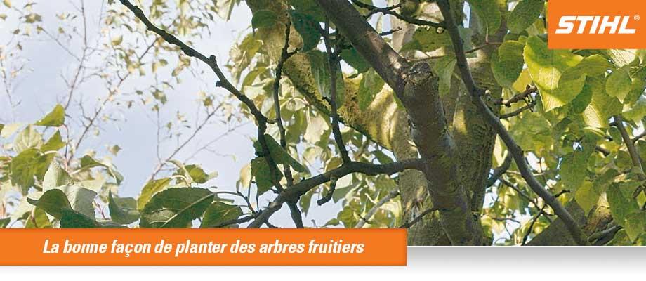 La bonne façon de planter des arbres fruitiers