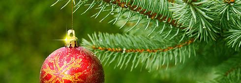 Choisir le sapin de Noël parfait
